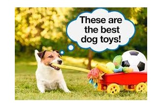 New Dog Toy Order/ Rubber Food Grade Pet Training Toy Order From USA/AwesomeRubber Supplier